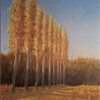 Poplars at Cringleford